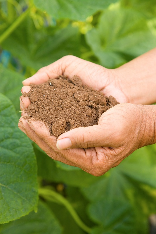 What's in your soil?